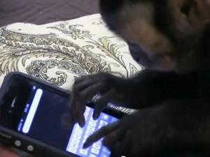 monkeyiphone